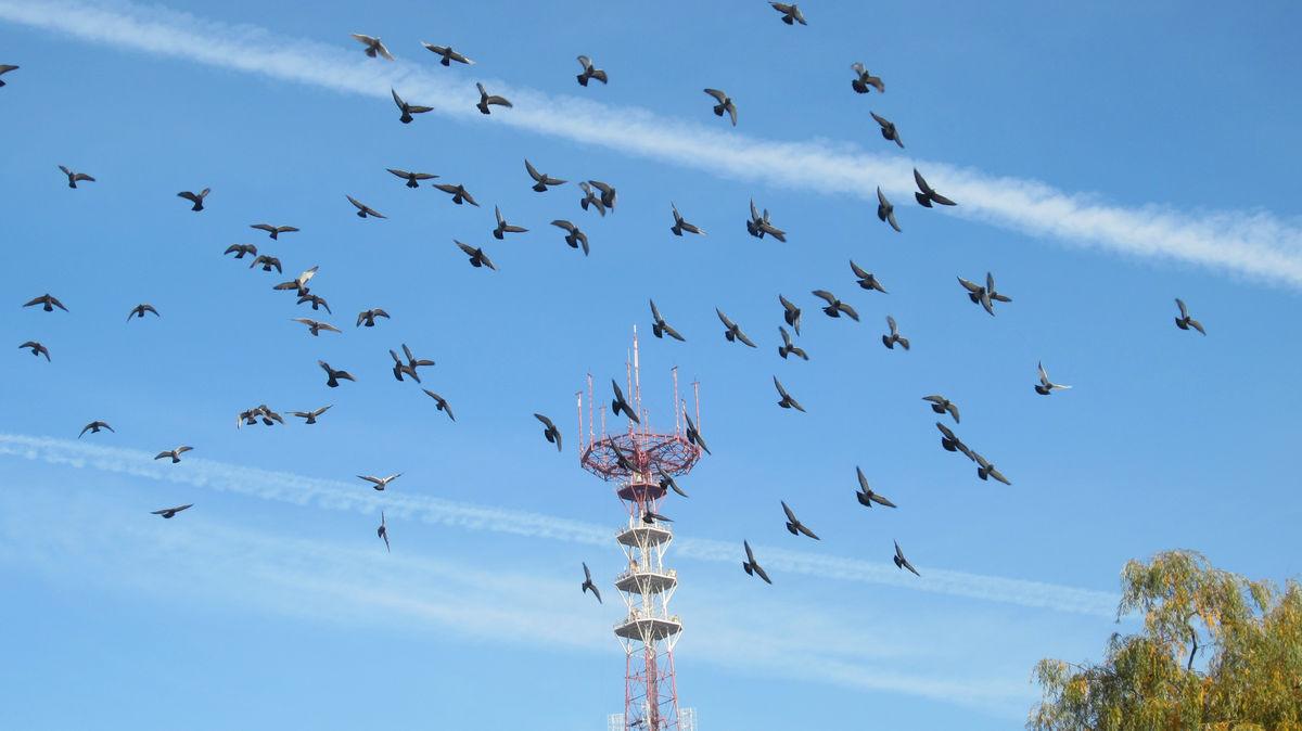 В небе голуби.